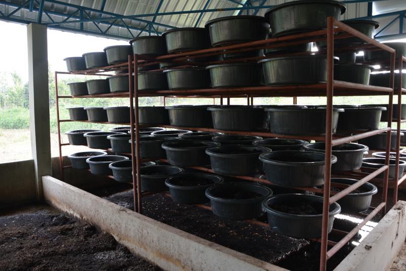เลี้ยงไส้เดือนดินในกะละมัง